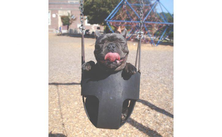 chien-heureux-balencoire-escarpolette