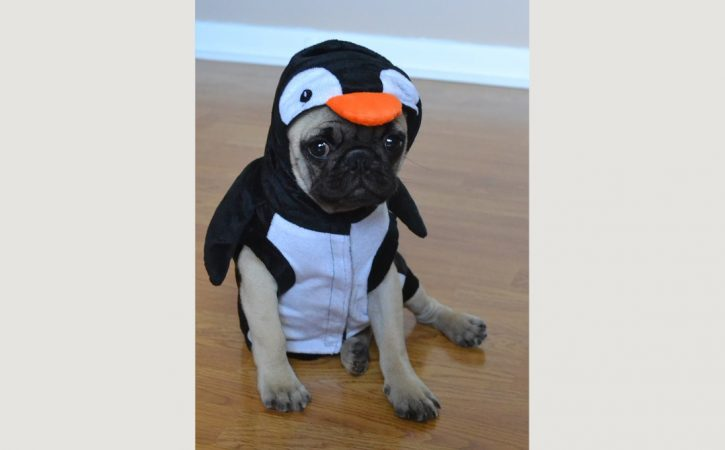 chien-costume-pinguin-histrion