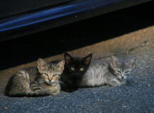 chats-jeunes-vauriens-galapiats