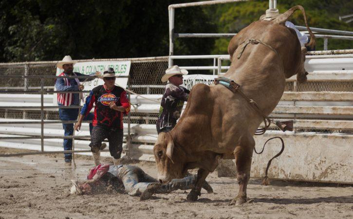taureau-rodeo-gagne-deconfire