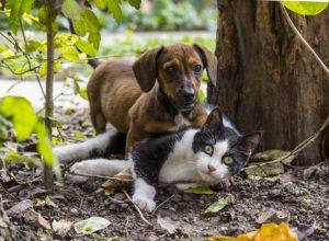 chien-chat-calins-surpris-fredaine