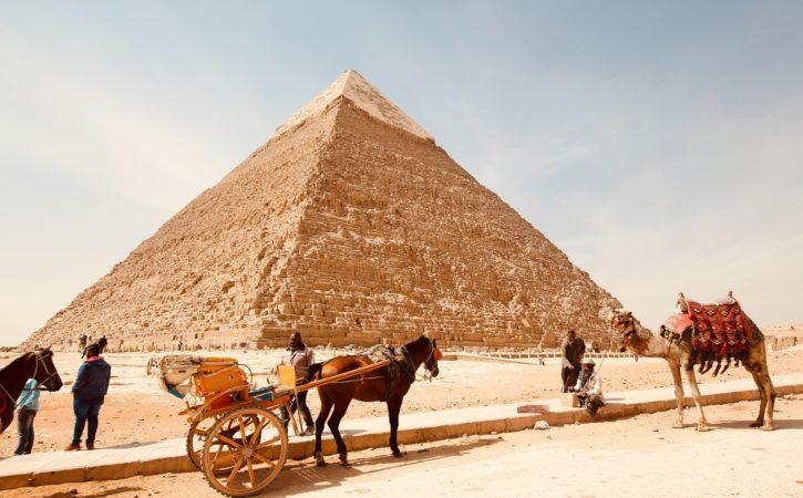 chameau-cheval-devant-pyramide-neophobie