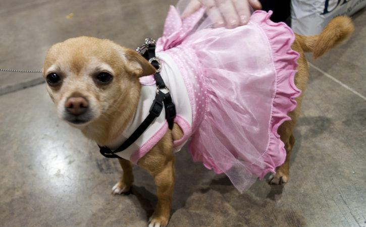 chien-robe-jolie-bonace