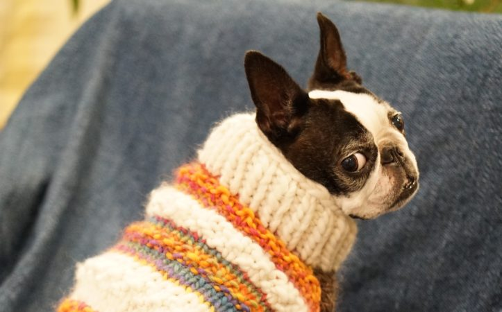 chien-pullover-fat-mirliflore