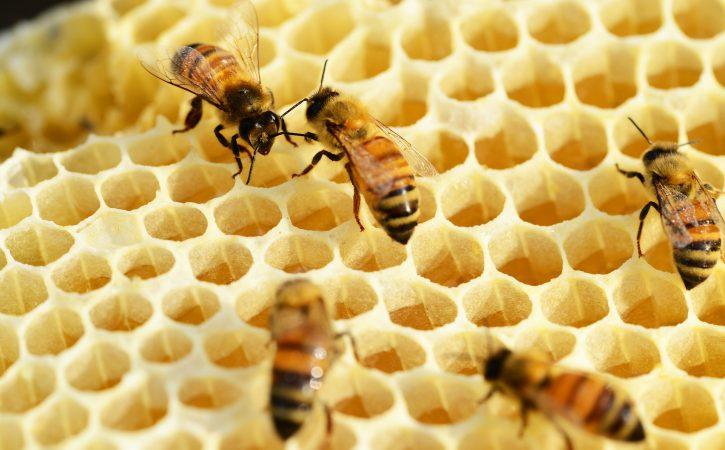 abeilles-rayons-melliflue