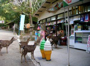 cerfs-magazin-achalande