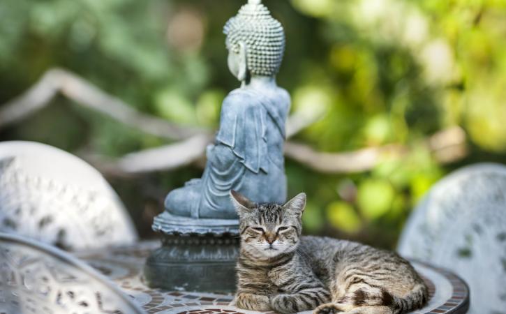 chat-bouddhiste-proselyte