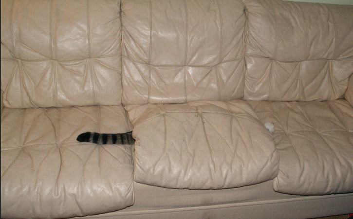 chat-cache-couard