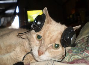 chat-casque-audio-acouphenes