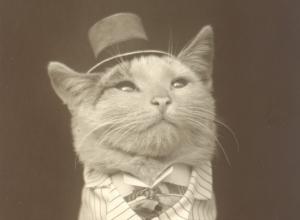 chat-chapeau-suranne