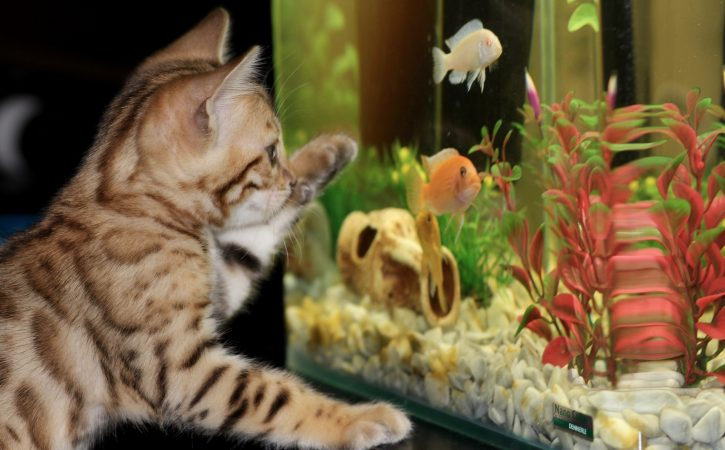 chat-devant-aquarium-allocentrisme