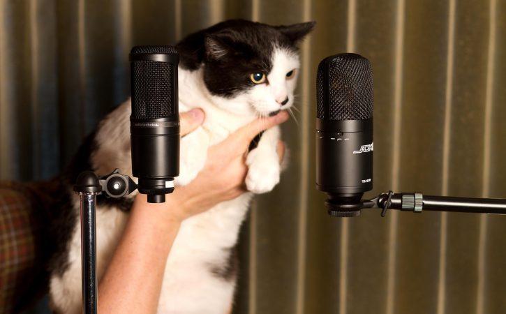 chat-devant-micro-faconde
