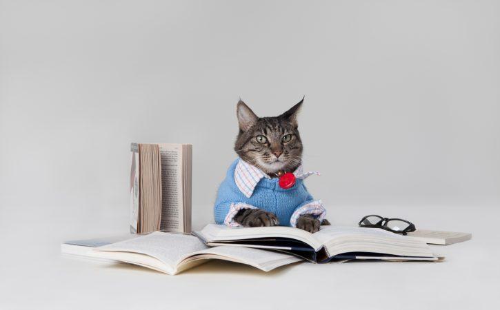 chat-livres-habille-rimailleur