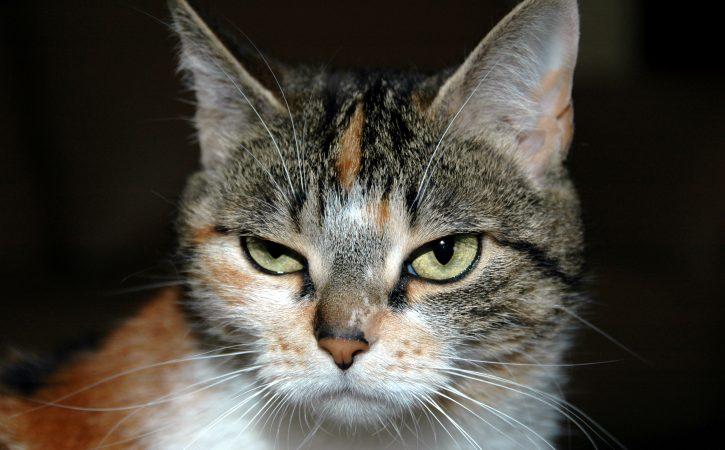 chat-ne-comprend-pas-comprenette