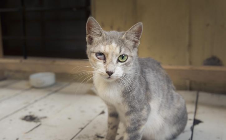 chat-oeil-sartrien