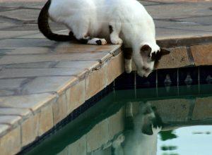 chat-piscine-hesite-tergiverser
