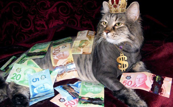 chat-riche-argent-sardanapalesque