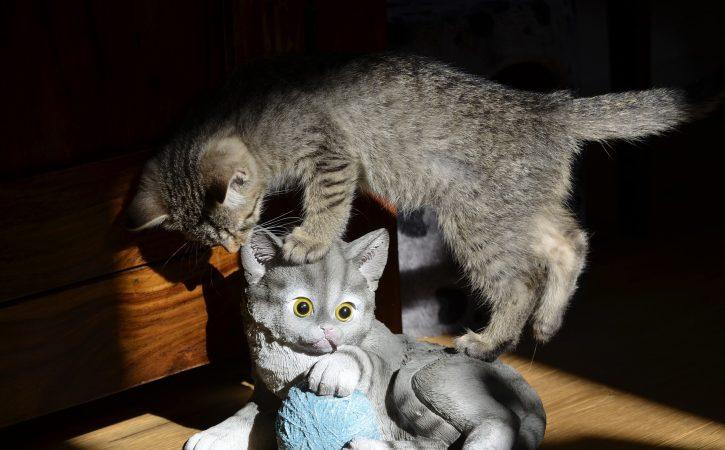 chat-sur-statue-apocryphe