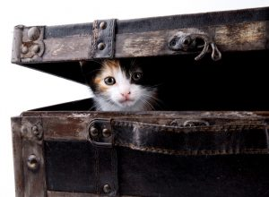 chat-valise-impedimenta
