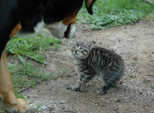 chaton-et-chien-foutriquet