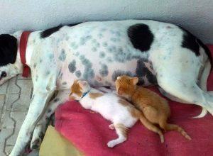 chatons-tete-chienne-thaumaturge