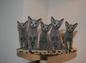 chats-cinq-gris-quine