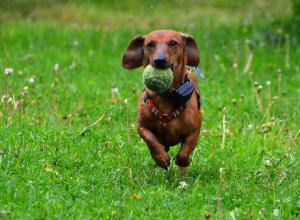 chien-avec-une-balle-balade-baguenauder