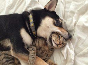chien-chat-dans-la-gorge-proverbial