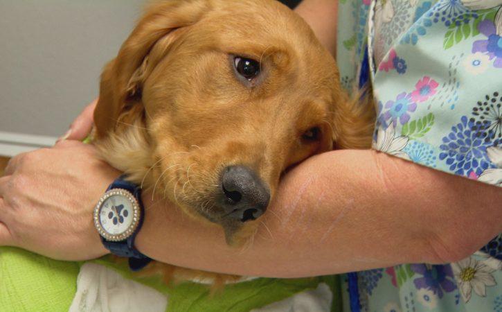 chien-chez-veterinaire-cacochyme