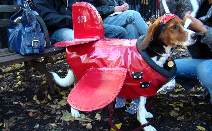 chien-deguise-en-avion-insane