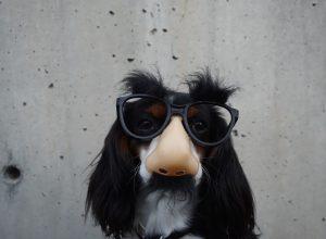 chien-deguise-nez-lunette-oripeaux