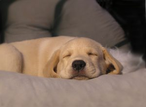 chien-dort-bienheureux-procrastination