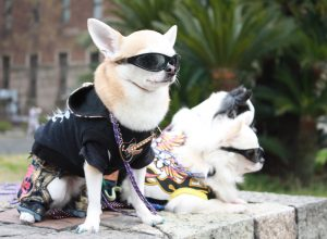 chien-habille-lunette-habitus