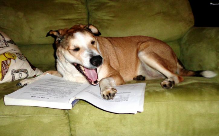 chien-lecture-pensum