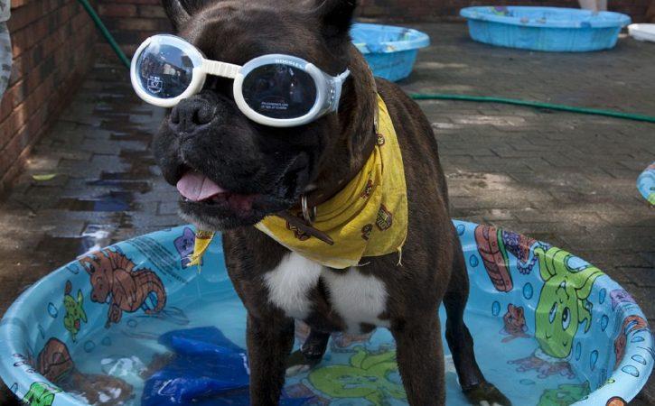 chien-lunette-bandana-truculent