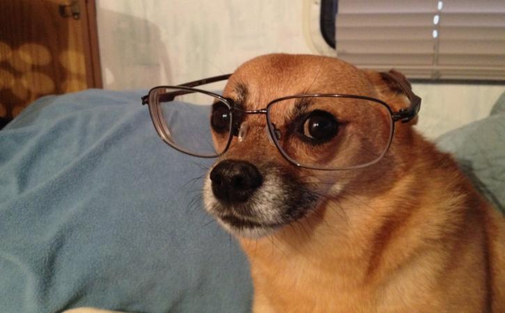 chien-lunette-grandiloquence