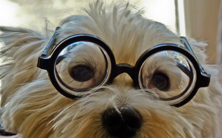 chien-lunette-plumitif