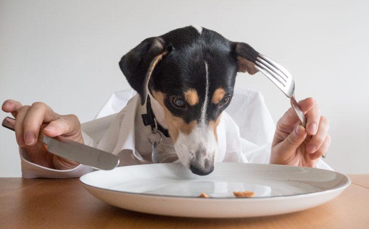 chien-mange-couverts-assiette-sybaritisme