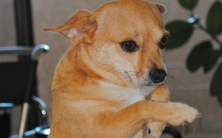 chien-prie-anachorete