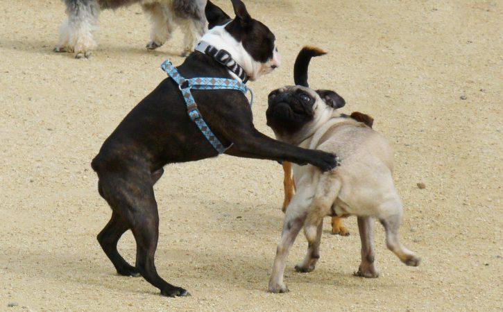 chien-touche-cul-lutiner