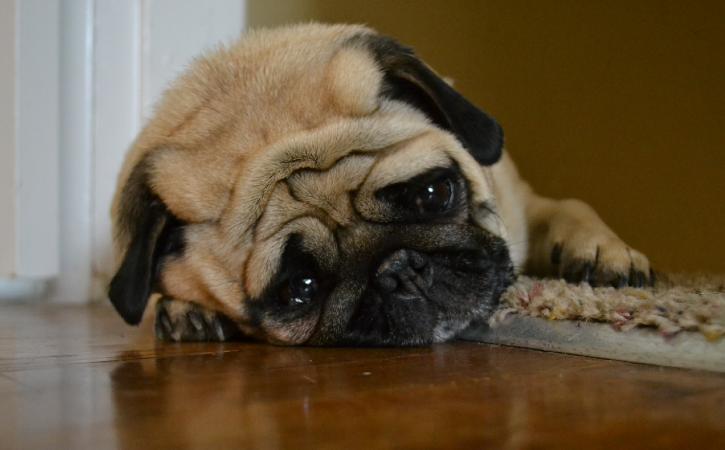 chien-triste-acedie