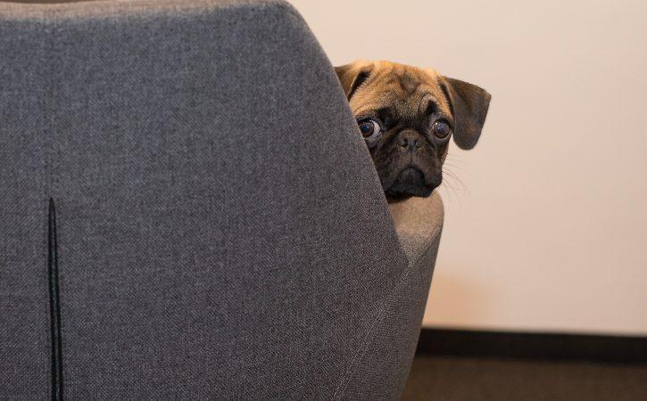 chien-triste-inique