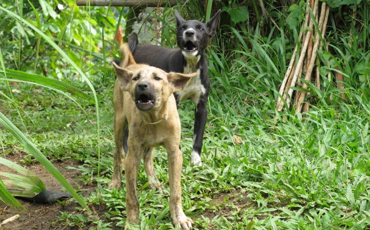 chiens-aboient-conspuer