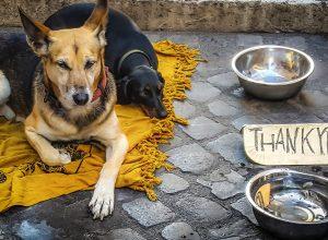 chiens-mendient-ecuelle-indigence
