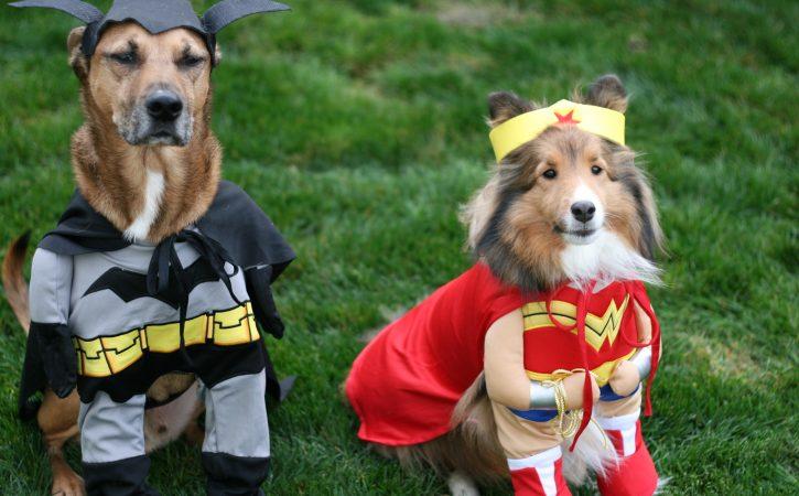 chiens-super-heros-tartarinesques