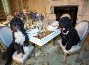 chiens-table-urbain