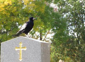 corbeau-tombe-peroraison