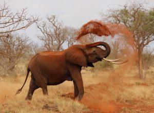 elephant-douche-de-terre-pulverulent