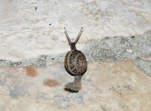 escargot-fait-caca-defequer