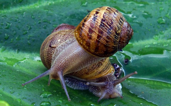 escargots-pluie-oindre